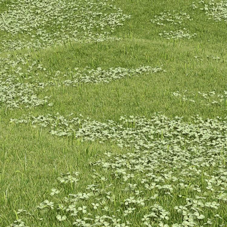 fpp-lib-presets-lawns-white_clover_01_large.jpg