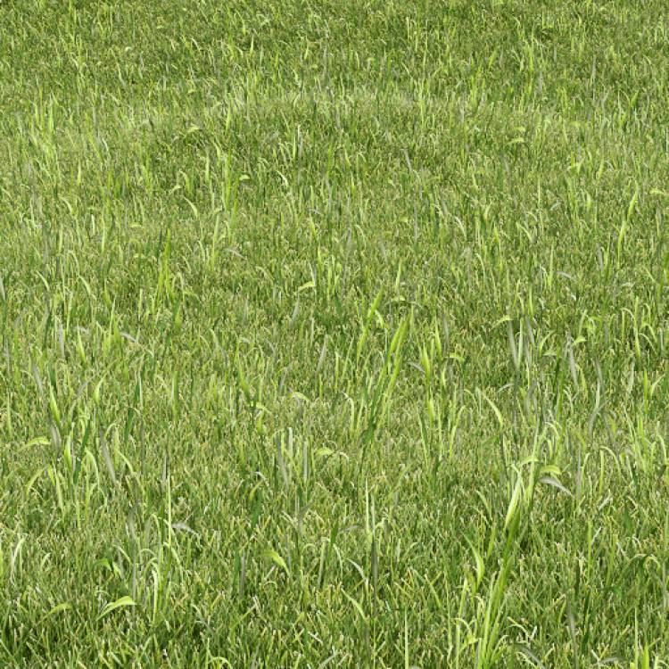 fpp-lib-presets-lawns-wild_grass_01_large.jpg