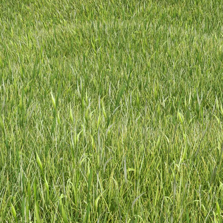 fpp-lib-presets-lawns-wild_grass_02_large.jpg