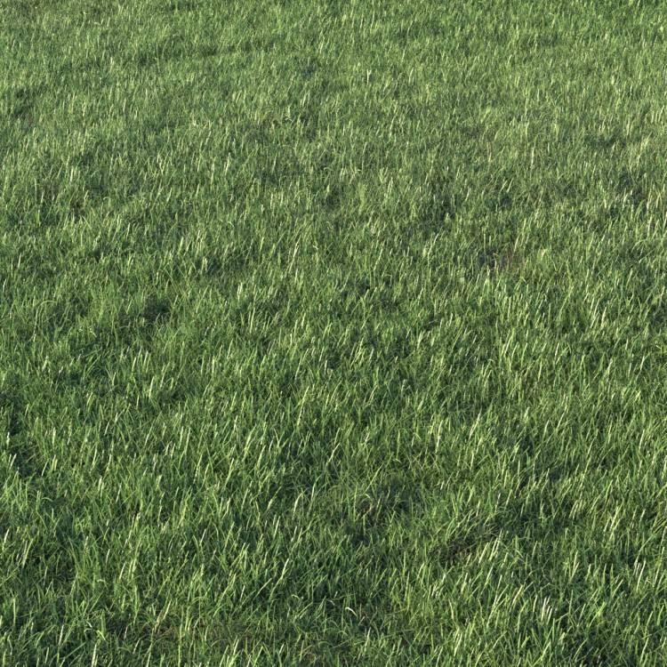 fpp-lib-presets-layered-lawns-grass_base_layer_1_detail.jpg