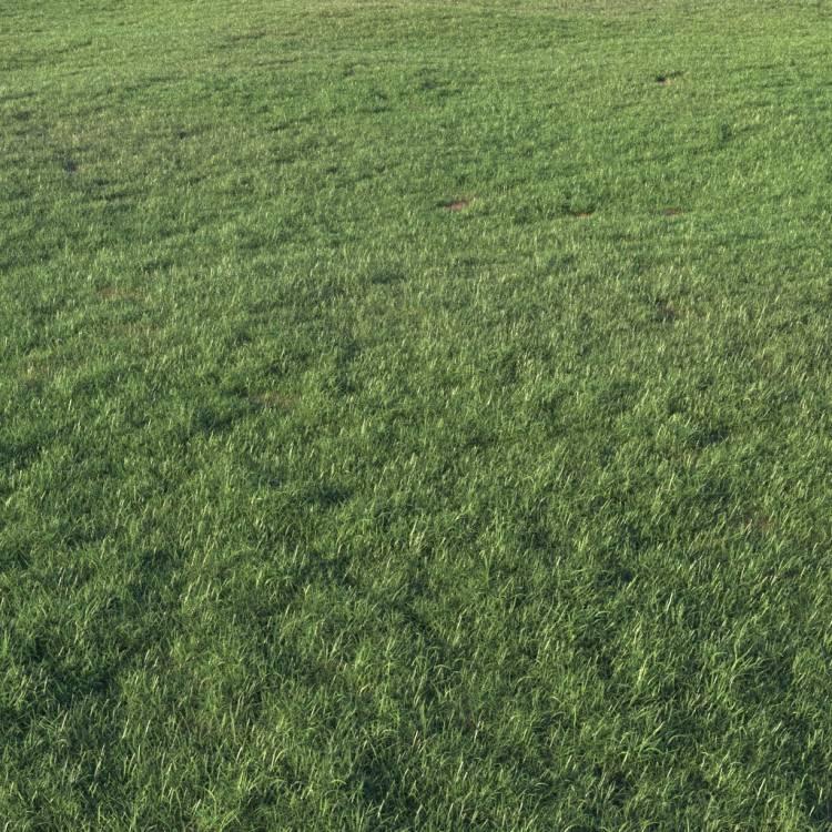fpp-lib-presets-layered-lawns-grass_base_layer_2_large.jpg