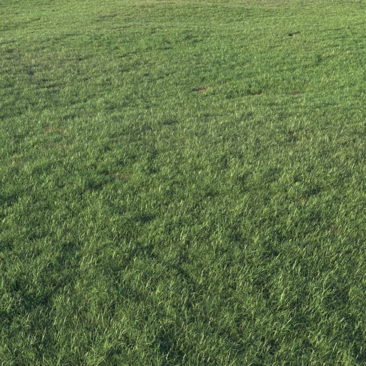 fpp-lib-presets-layered-lawns-grass_base_layer_2_large.jpg