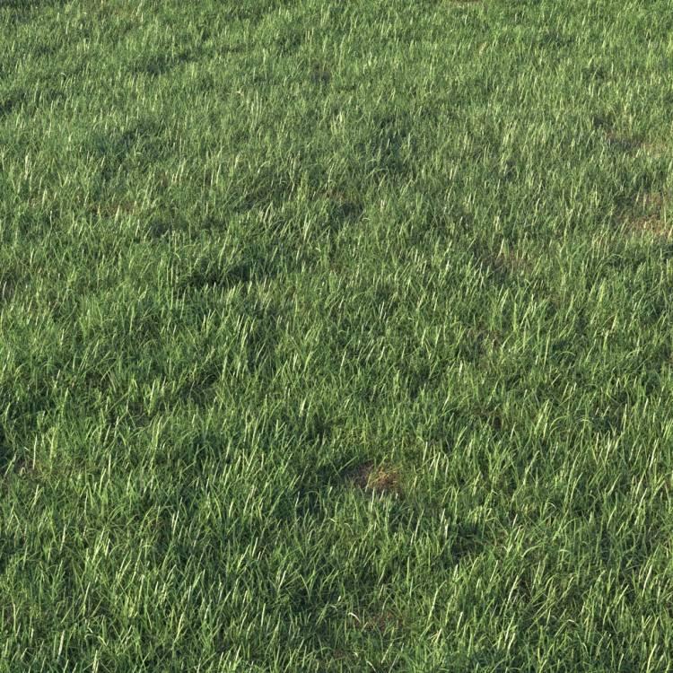 fpp-lib-presets-layered-lawns-grass_base_layer_3_detail.jpg
