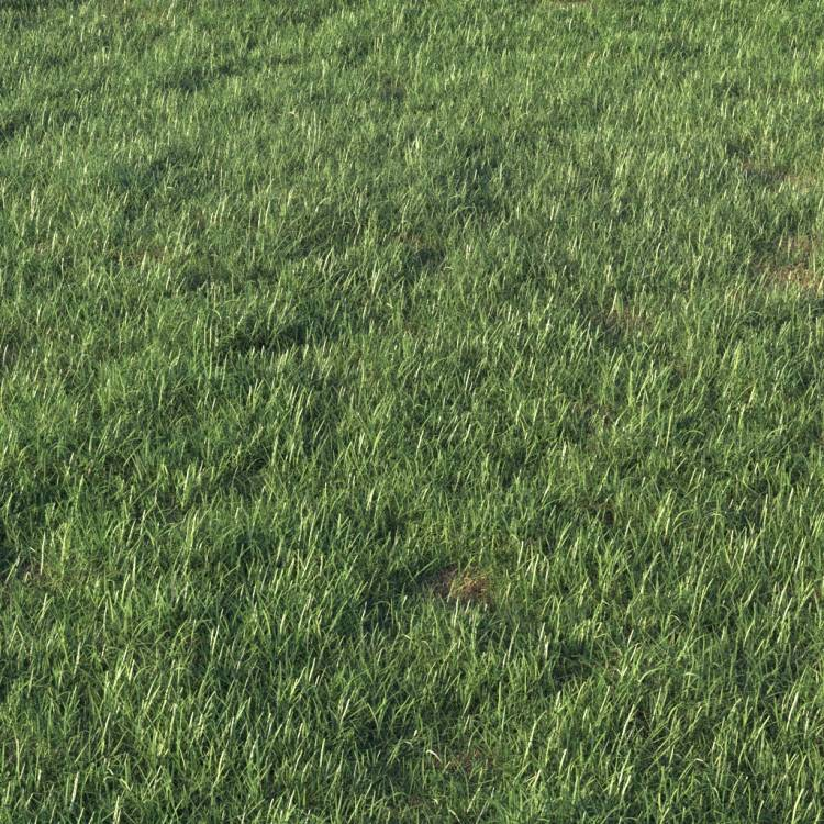 fpp-lib-presets-layered-lawns-grass_base_layer_3_detail.jpg
