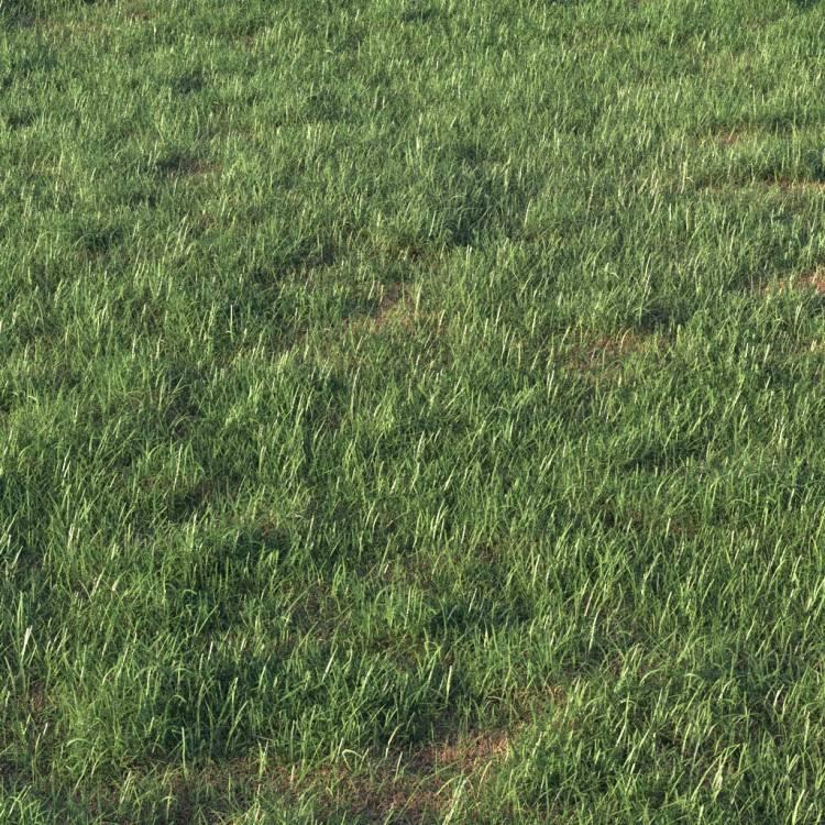 fpp-lib-presets-layered-lawns-grass_base_layer_4_detail.jpg