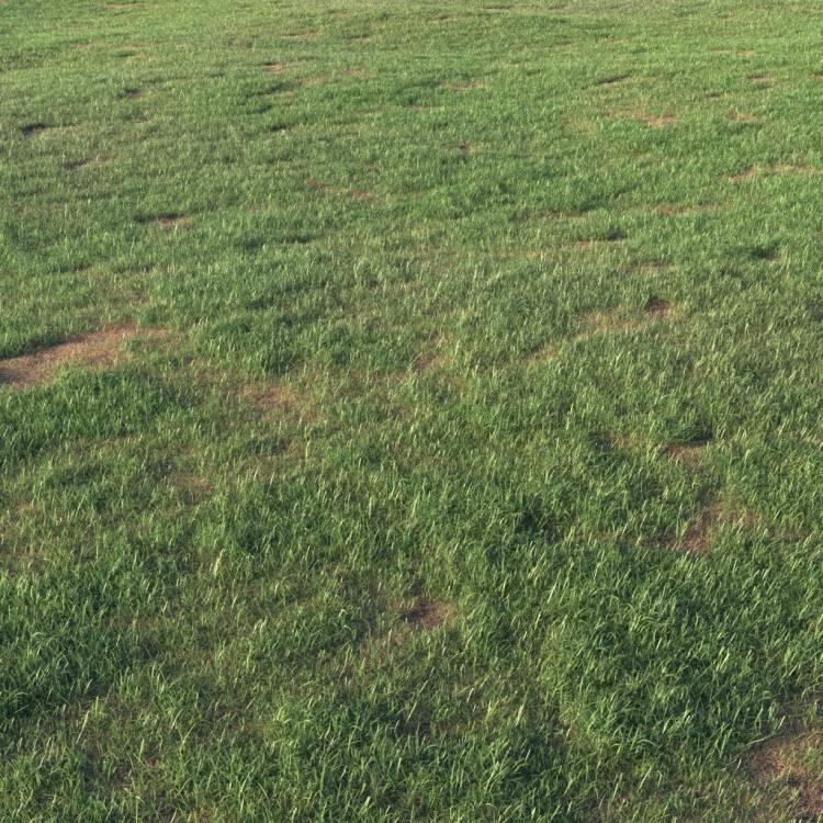 fpp-lib-presets-layered-lawns-grass_base_layer_5_large.jpg