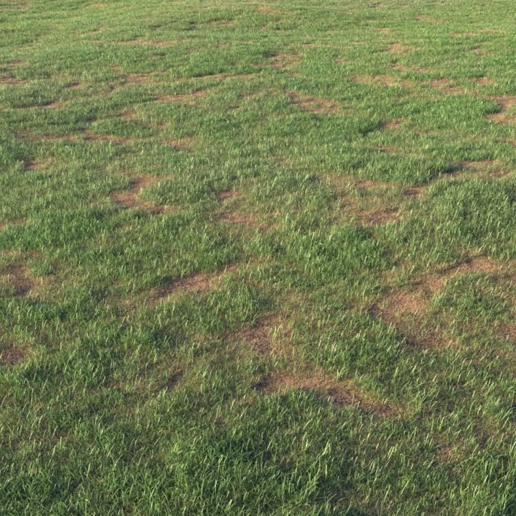fpp-lib-presets-layered-lawns-grass_base_layer_6_large.jpg