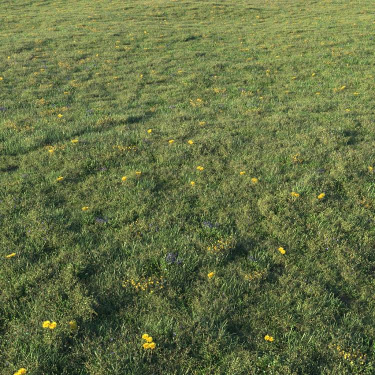 fpp-lib-presets-layered-lawns-unkempt_lawn_aio_1_large.jpg