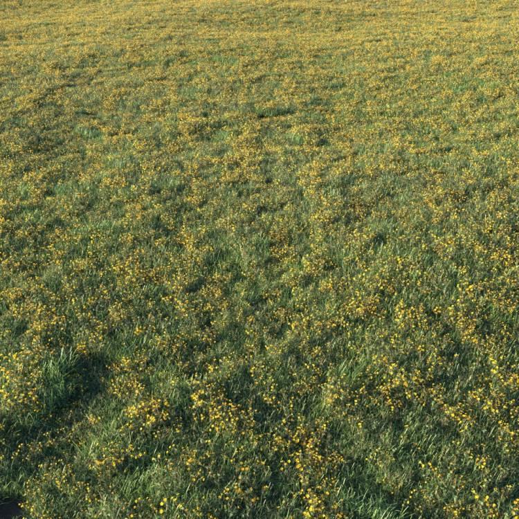 fpp-lib-presets-layered-lawns-unkempt_lawn_aio_3_large.jpg