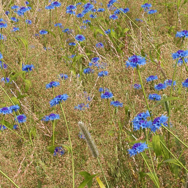 fpp-lib-presets-meadows-blue_cornflower_detail.jpg