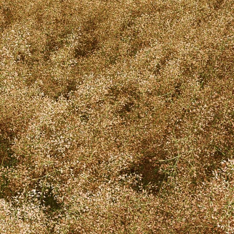 fpp-lib-presets-meadows-common_bent_windswept_detail.jpg