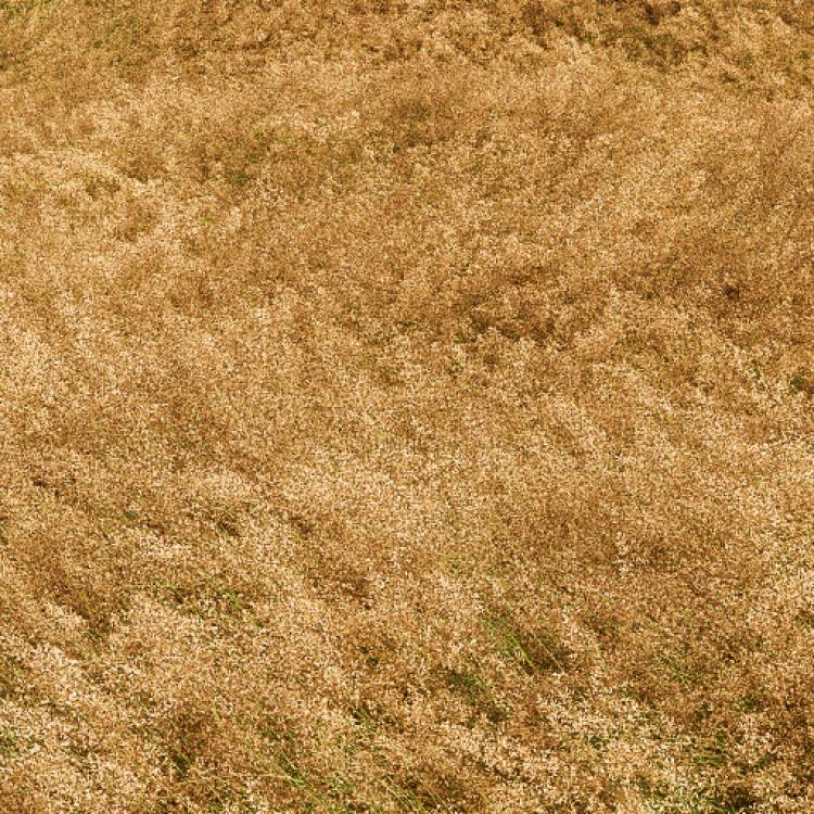 fpp-lib-presets-meadows-common_bent_windswept_large.jpg