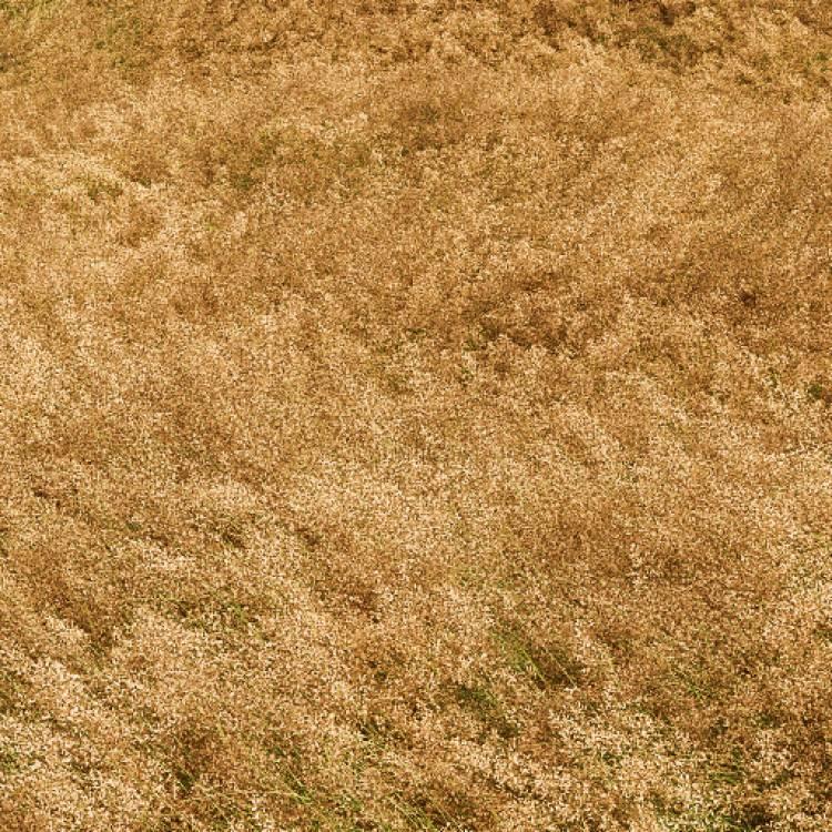 fpp-lib-presets-meadows-common_bent_windswept_large.jpg