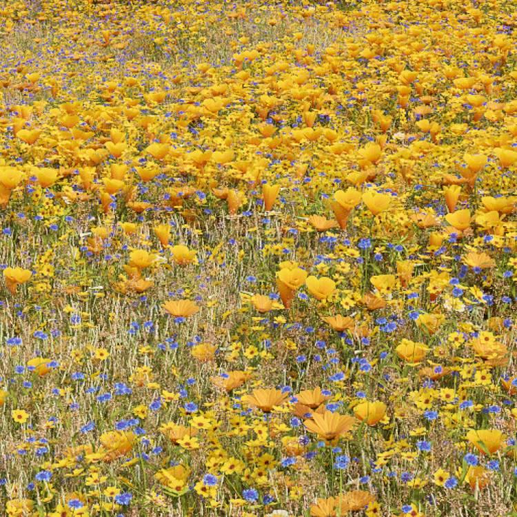 fpp-lib-presets-meadows-golden_wild_meadow_large.jpg