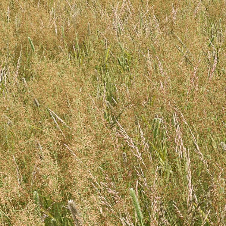 fpp-lib-presets-meadows-meadow_grass_1_detail.jpg