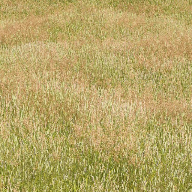 fpp-lib-presets-meadows-meadow_grass_1_large.jpg