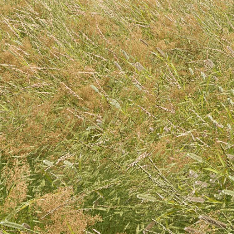 fpp-lib-presets-meadows-meadow_grass_1_windswept_detail.jpg