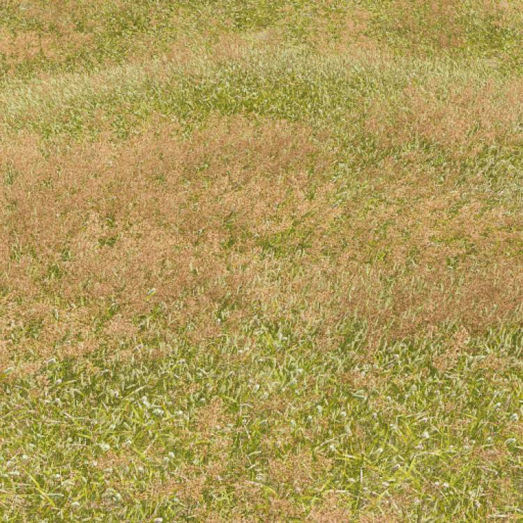 fpp-lib-presets-meadows-meadow_grass_1_windswept_large.jpg