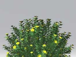 fpp-lib-2d-shrubs-allamanda.jpg