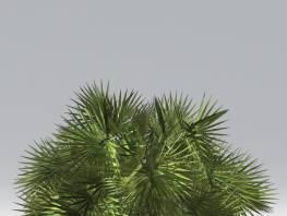 fpp-lib-2d-shrubs-chamaerops.jpg