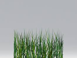 fpp-lib-2d-shrubs-grass.jpg