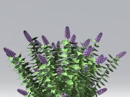 fpp-lib-2d-shrubs-lilac.jpg