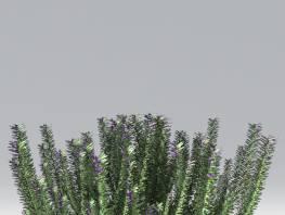 fpp-lib-2d-shrubs-rosemary.jpg