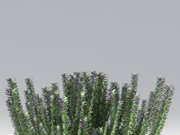 fpp-lib-2d-shrubs-rosemary.jpg