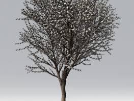 fpp-lib-2d-trees-almond.jpg