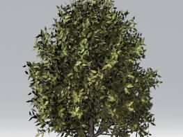 fpp-lib-2d-trees-bay_laurel.jpg