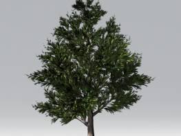 fpp-lib-2d-trees-black_pine.jpg