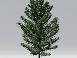 fpp-lib-2d-trees-black_tupelo.jpg