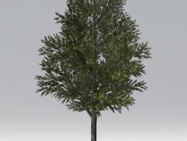 fpp-lib-2d-trees-common_juniper.jpg