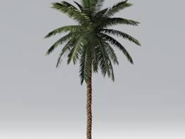 fpp-lib-2d-trees-date_palm.jpg