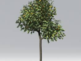 fpp-lib-2d-trees-orange.jpg