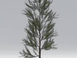 fpp-lib-2d-trees-scots_pine.jpg