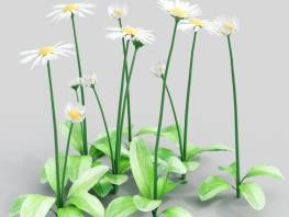 fpp-lib-3d-flowers_and_grass-daisy_05.jpg