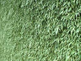 fpp-lib-presets-green-walls-cretan_brake_xy.jpg