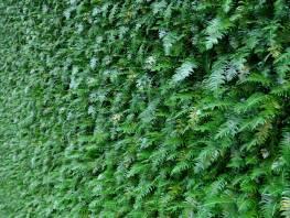 fpp-lib-presets-green-walls-ferns_1_xy.jpg