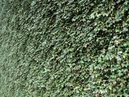 fpp-lib-presets-green-walls-grape_ivy_xy.jpg