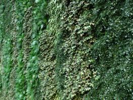 fpp-lib-presets-green-walls-green_wall_uv_clusters.jpg