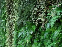 fpp-lib-presets-green-walls-green_wall_xy_diversity_map.jpg