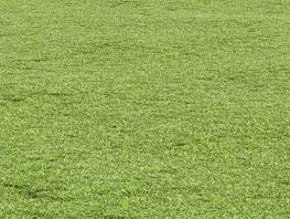 fpp-lib-presets-lawns-cut_grass_field_01_large.jpg