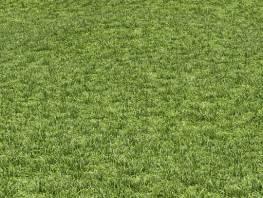 fpp-lib-presets-lawns-cut_grass_field_02_large.jpg