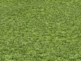 fpp-lib-presets-lawns-cut_grass_field_02_large.jpg
