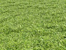 fpp-lib-presets-lawns-cut_grass_field_03_detail.jpg