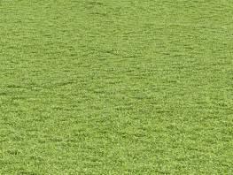 fpp-lib-presets-lawns-cut_grass_field_03_large.jpg