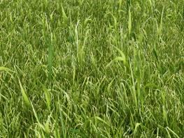 fpp-lib-presets-lawns-wild_grass_01_detail.jpg