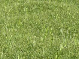 fpp-lib-presets-lawns-wild_grass_01_large.jpg