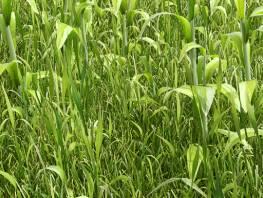 fpp-lib-presets-lawns-wild_grass_03_detail.jpg